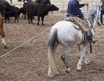 Caballo del trabajo del montar a caballo del vaquero Imágenes de archivo libres de regalías
