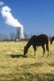 Caballo delante de una central nuclear Fotos de archivo