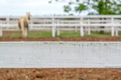Caballo detrás de la cerca Fotografía de archivo libre de regalías