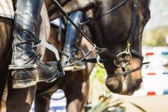 Caballo ecuestre Rider Boots Closeup Fotografía de archivo