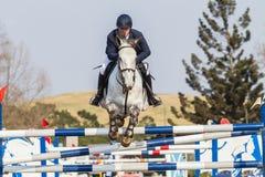 Caballo ecuestre Rider Jumping Fotografía de archivo