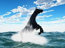 Caballo en agua Imagen de archivo