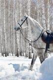Caballo en bosque del invierno Fotografía de archivo
