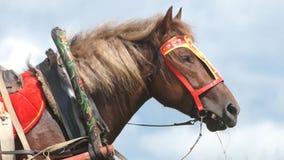 Caballo en el campo, caballo del país almacen de metraje de vídeo