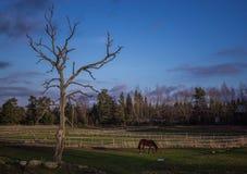 Caballo en el campo y el árbol Foto de archivo