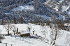 Caballo en el paisaje del invierno imagen de archivo