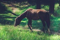 Caballo en el pasto Imagen de archivo libre de regalías