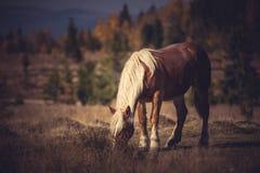 Caballo en el prado Fotografía de archivo libre de regalías