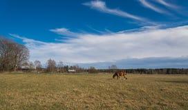 Caballo en el prado Fotografía de archivo