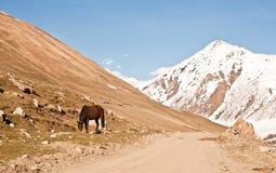 Caballo en el prado - Ushguli - Svaneti superior, montaña del Cáucaso Fotos de archivo