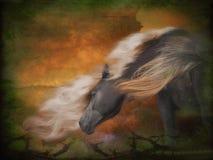 Caballo en el viento Imagen de archivo libre de regalías