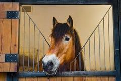 caballo en establo Fotografía de archivo