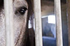 caballo en establo Fotos de archivo