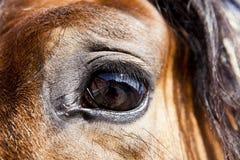 caballo en establo Imagen de archivo libre de regalías