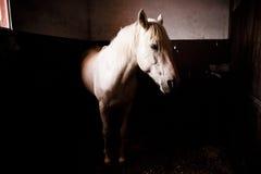 caballo en establo Imagenes de archivo