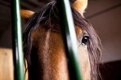 caballo en establo Imágenes de archivo libres de regalías