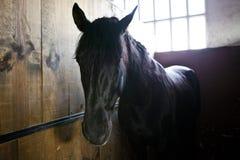 caballo en establo Imagen de archivo