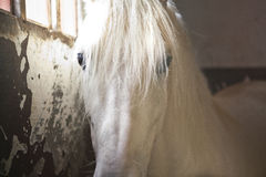 caballo en establo Fotos de archivo libres de regalías