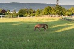 Caballo en granja Fotos de archivo