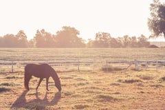 Caballo en la granja Imagen de archivo