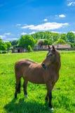 Caballo en la naturaleza Retrato de un caballo, caballo marrón Imagen de archivo