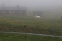 Caballo en la niebla Imágenes de archivo libres de regalías