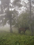 Caballo en la niebla del predawn Foto de archivo libre de regalías