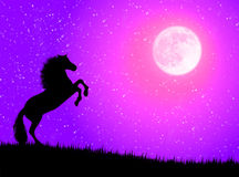 Caballo en la noche stock de ilustración