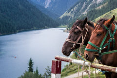 Caballo en la orilla de un lago de la montaña Imagen de archivo libre de regalías