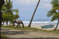 Caballo en la playa Imagenes de archivo