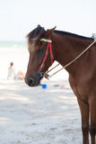 Caballo en la playa Imagen de archivo