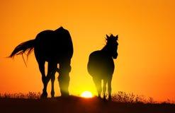 Caballo en la puesta del sol Foto de archivo libre de regalías