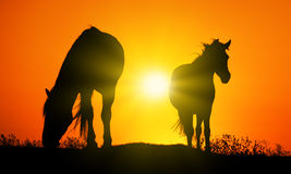 Caballo en la puesta del sol Fotografía de archivo
