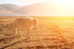 Caballo en la tierra de la hierba Imagen de archivo libre de regalías