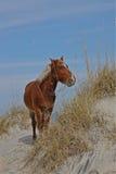Caballo en las dunas de la playa Fotos de archivo
