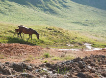 Caballo en montañas Foto de archivo