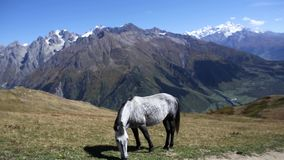 Caballo en pasto en las montañas