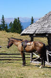 Caballo en un establo de la montaña Fotografía de archivo libre de regalías