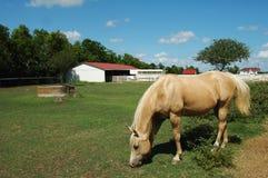 Caballo en un rancho Fotos de archivo
