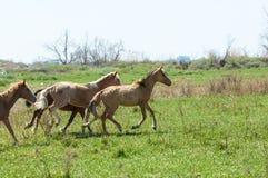 caballo, equino, queja, hoss, corte, caballo de labor fotografía de archivo libre de regalías