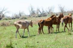 caballo, equino, queja, hoss, corte, caballo de labor fotografía de archivo