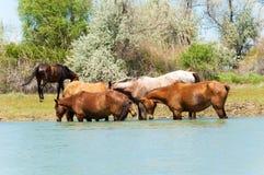 caballo, equino, queja, hoss, corte, caballo de labor imagenes de archivo
