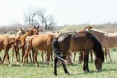 caballo, equino, queja, hoss, corte, caballo de labor imagen de archivo