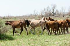 caballo, equino, queja, hoss, corte, caballo de labor foto de archivo libre de regalías