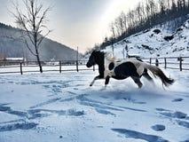 Caballo hermoso del wiew del invierno frío Imagen de archivo libre de regalías