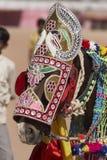 Caballo indio del festival Fotografía de archivo libre de regalías