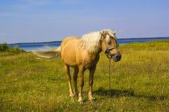 Caballo marrón claro con la melena blanca en prado verde cerca del lago Imagen de archivo