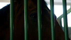 caballo marrón grande en parada detrás de barras almacen de metraje de vídeo