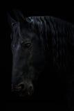 Caballo negro Imagen de archivo