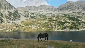 Caballo negro por el lago Fotografía de archivo libre de regalías